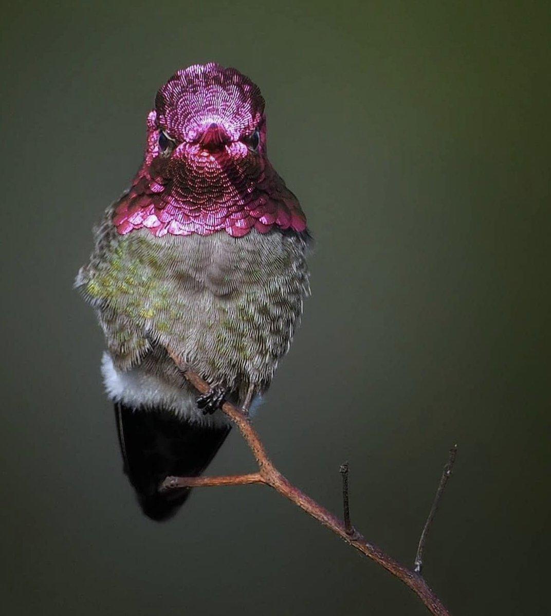 amazingbird