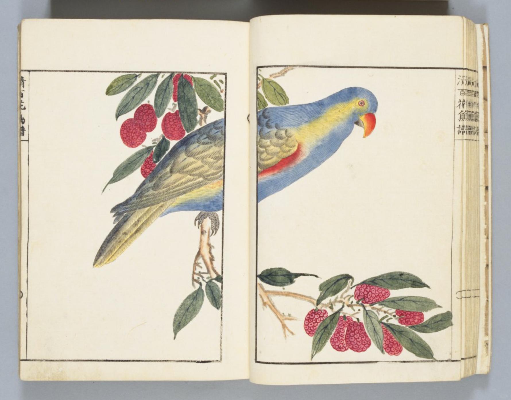 bird10