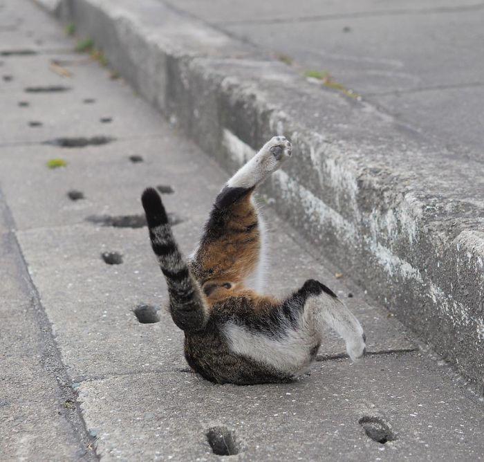 stray-cats-play-drain-pipe-holes-nyan-kichi-japan-12-58d3ad08360b9__700