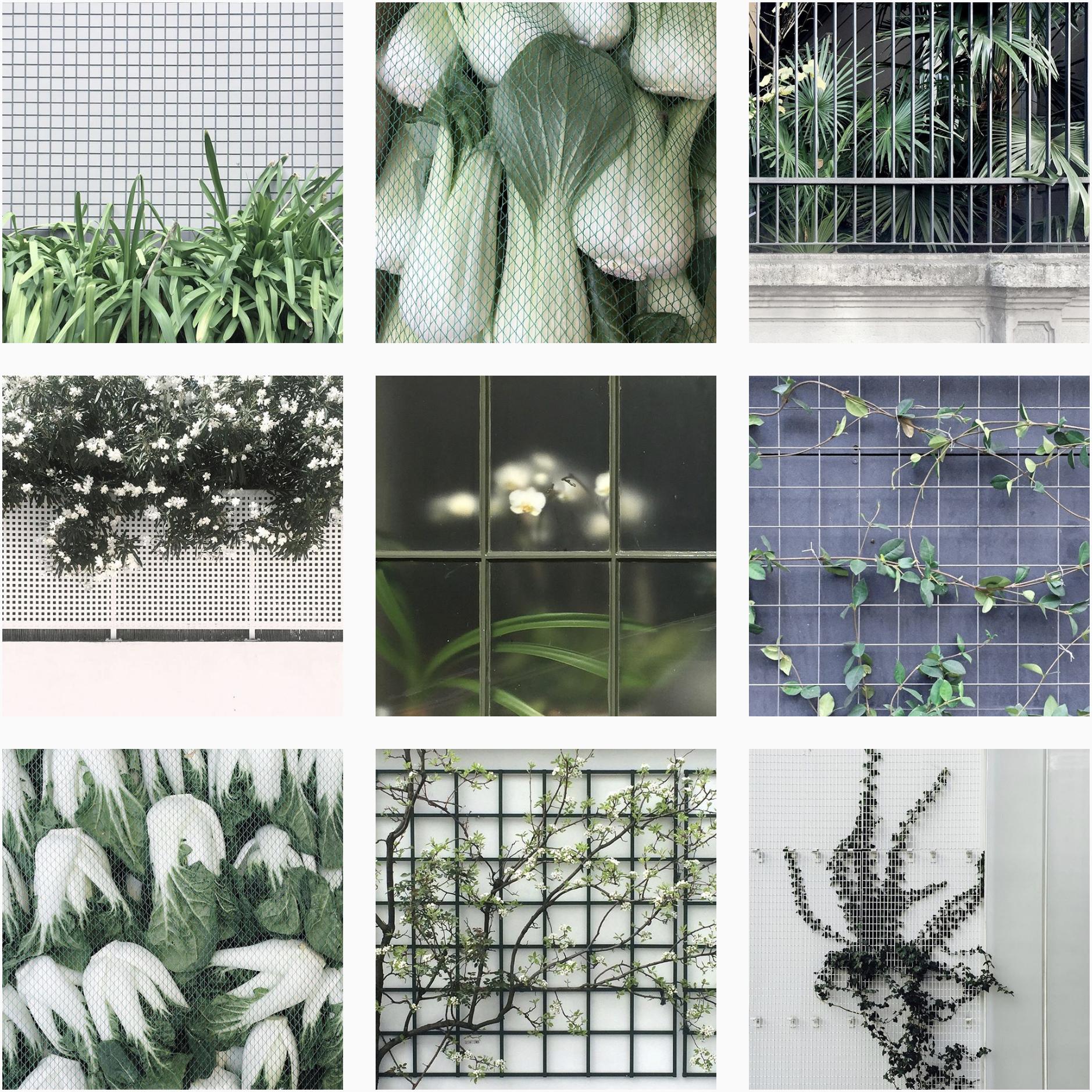 plantsgrids1